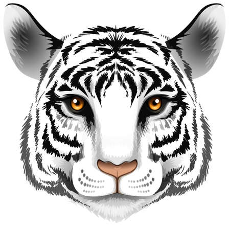 panthera tigris sumatrae: Illustration of a head of a tiger on a white background