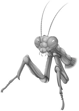 Illustration of a grey praying mantis on a white background Vector
