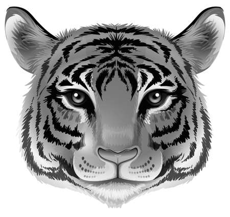 panthera: Illustration of a head of a tiger in grey color on a white background Illustration