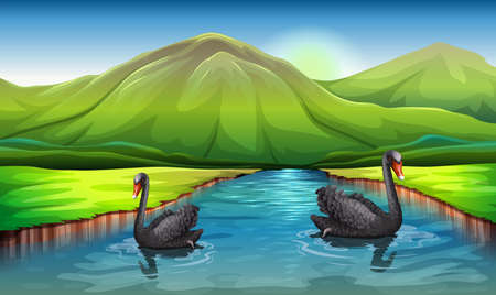 Illustration of the swans in the river