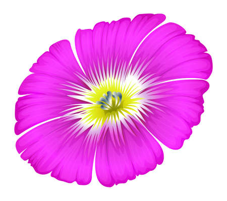 plantae: Illustration of a purple flower on a white background Illustration