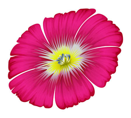 plantae: Illustration of a pink flower on a white background Illustration