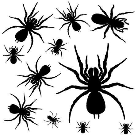 araneae: Illustration of the spiders on a white background Illustration
