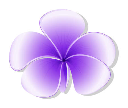 plantae: Illustration of a violet flower on a white background