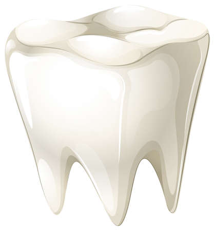 deep roots: Illustration of a tooth on a white background Illustration