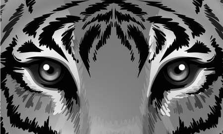 鋭い目を持つ虎図