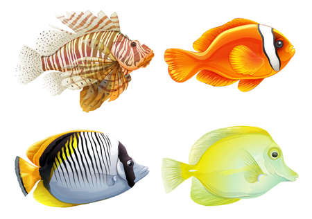 ectothermic: Illustration of the four fishes on a white background