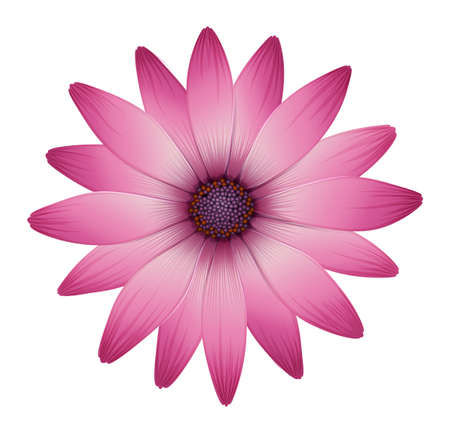 pinkish: Illustration of a flower with pink petals on a white background