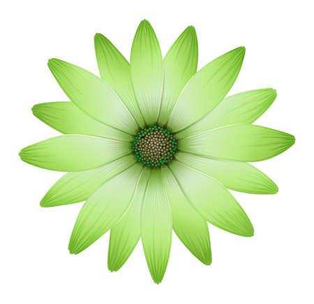 plantae: Illustration of a flower with green petals isolated on white  Illustration