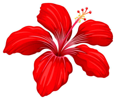 plantae: Illustration of a red hibiscus plant isolated on white  Illustration