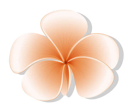 beautification: Illustration of a fresh five-petal flower on a white  Illustration