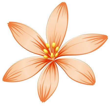 beautification: Illustration of a fresh five-petal orange flower on a white background Illustration