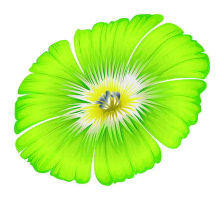 beautification: Illustration of a bright green flower on a white background