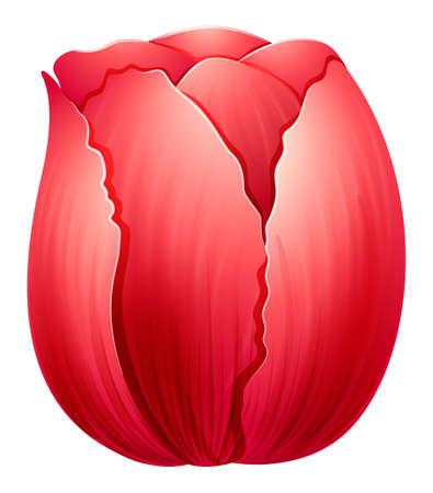 Illustration of a red tulip on a white background Ilustração