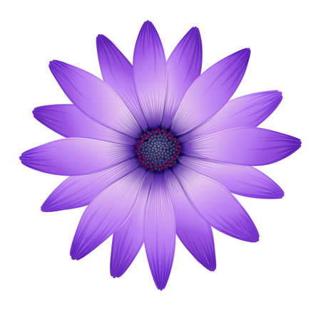 Illustration of a fresh purple flower on a white background