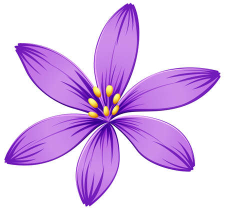 flower structure: Illustration of a five-petal purple flower on a white background