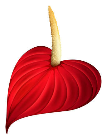 Illustration of a red flower on a white background