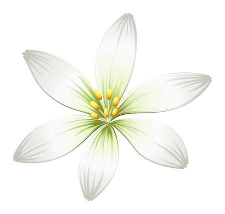 beautification: Illustration of a fresh white flower on a white background