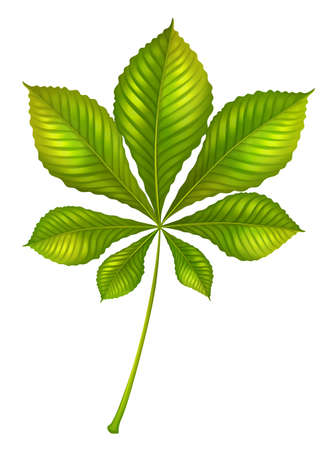 chloroplast: Illustration of a green leafy plant on a white background
