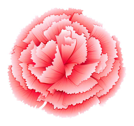 plantae: Illustration of a carnation pink flower on a white background
