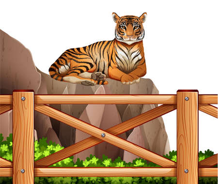 animalia: Illustration of a tiger above the cliff on a white background