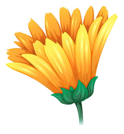 Illustration of a fresh yellow flower on a white background Illustration