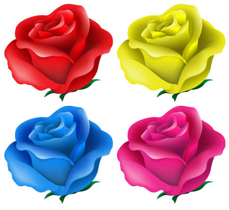 Illustration of the colorful roses on a white background