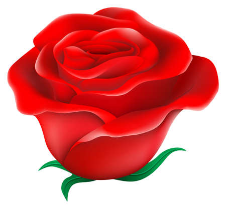 Illustration of a fresh red rose on a white background Illustration