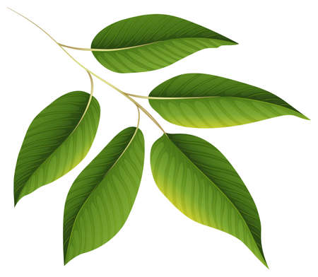 Illustration of a plant with green leaves on a white background