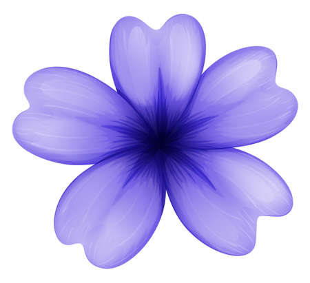 flower structure: Illustration of a violet flower on a white background