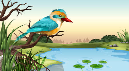 coraciiformes: Illustration of a river kingfisher