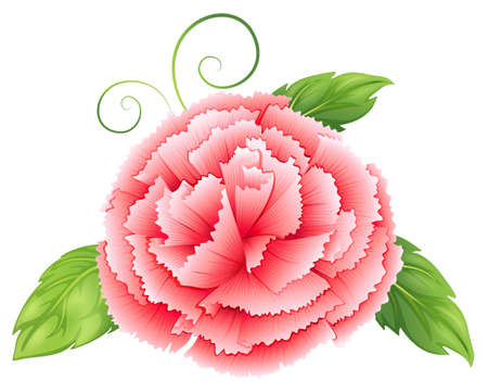 Illustration of a carnation pink flower with leaves on a white background