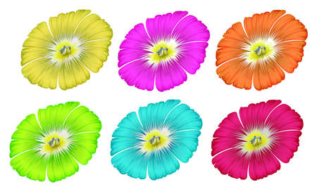 plantae: Illustration of the colourful flowers on a white background Illustration