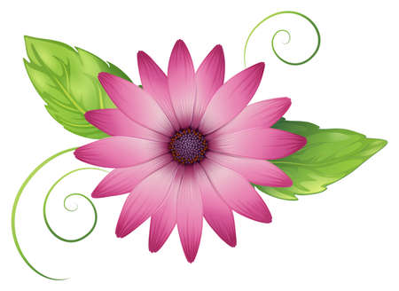 plantae: Illustration of a pink flower with leaves on a white background