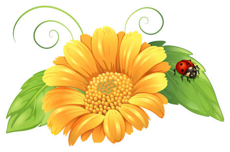 plantae: Illustration of a yellow flower with leaves and a bug on a white background Illustration
