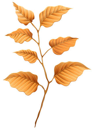 stomata: Illustration of the brown leaves on a white background