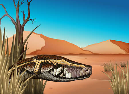 herpetology: Illustration of a desert with a reptile