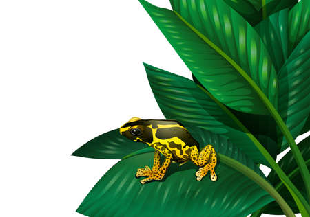 anura: Illustration of a plant with a frog on a white background