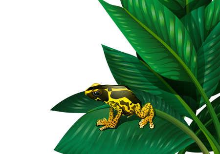 rana venenosa: Ilustración de una planta con una rana sobre un fondo blanco