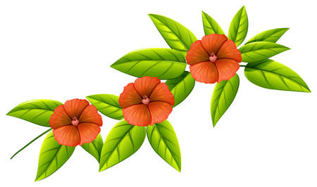 beautification: Illustration of the three orange flowers on a white background