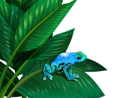 Illustration of a frog above the leaf of a plant on a white background