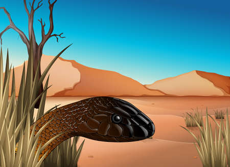 coldblooded: Illustration of a reptile at the desert
