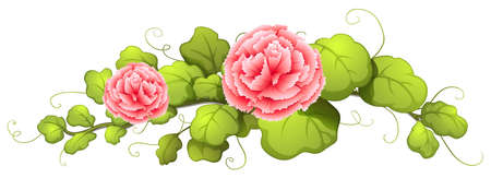 Illustration of a plant with carnation pink flowers on a white background Illustration