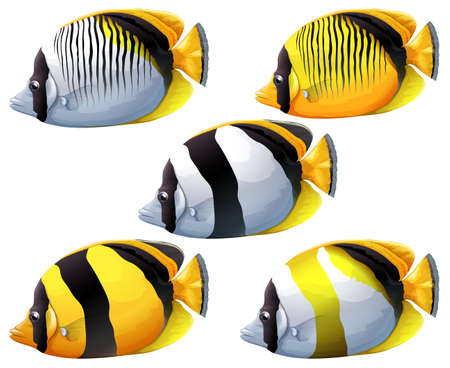 edible: Illustration of the five colourful fishes on a white background Illustration