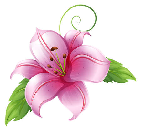 Illustration of a big flower on a white background