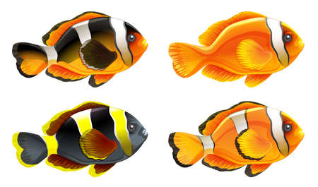 ectothermic: Illustration of the four colorful fishes on a white background