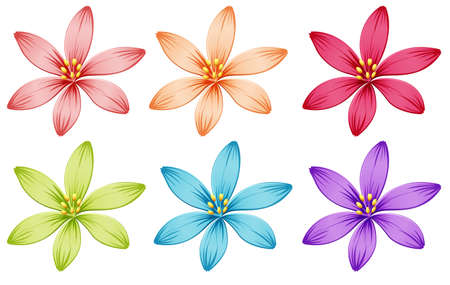 six objects: Illustration of the six flowers on a white background