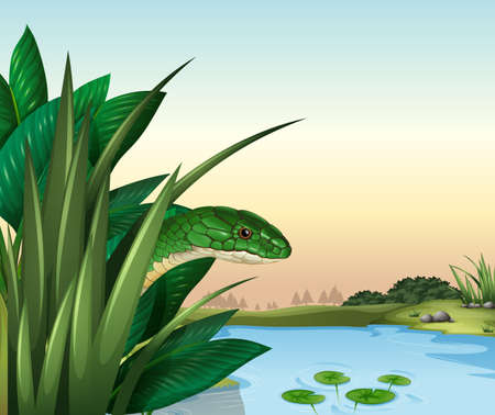ectothermic: Illustration of a green snake at the pond Illustration