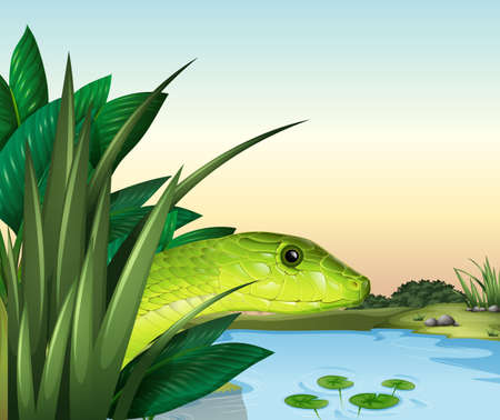 serpentes: Illustration of a snake at the pond
