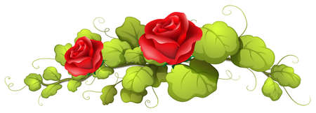 red rose: Illustration of a rose flower on a white background